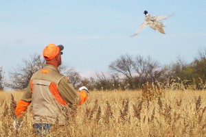 flying-feathers-hunting-information